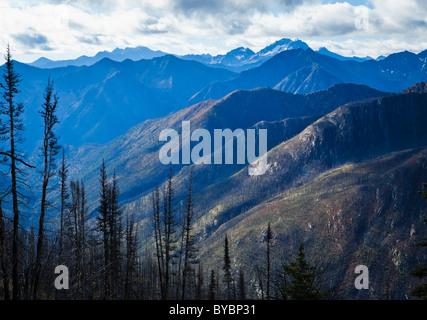 Ein Tal von meist verbrannte Bäume in den Nord-Kaskaden auf dem Pacific Crest Trail in der Nähe von Harts Pass, - Stockfoto
