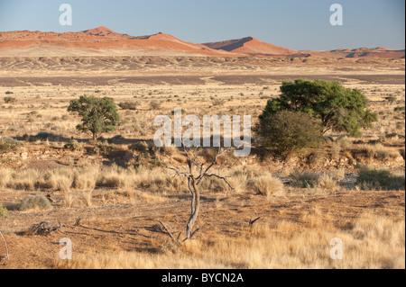 Der Tsauchab River Canyon, mit den roten Sanddünen in der Nähe von Sossusvlei, Namib-Naukluft-Park, zentral-Namibia. - Stockfoto