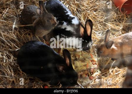 Kaninchen in einer Scheune - Stockfoto