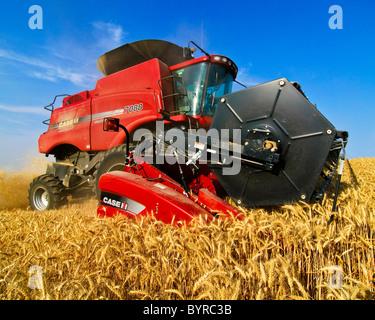 Landwirtschaft - Nahaufnahme von Case IH Mähdrescher beim Ernten von Weizen in der Palouse Region / in der Nähe - Stockfoto
