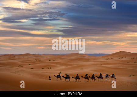 Berber Guide führt eine Gruppe von Touristen auf Kamelen in die Wüste Erg Chebbi für eine Nacht Fahrt Marokko - Stockfoto