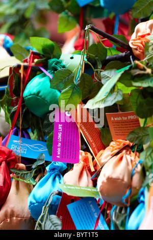 Wünsche auf Wunsch Baum Festival an Chinese New Year, Tai Po, New ...