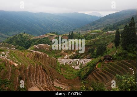Longsheng Reisterrassen Pingan Village im Nebel; PINGAN, Guangxi, china - Stockfoto