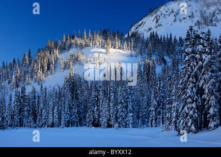 Mount Rainier Nationalpark wird ein Winter-Wunderland im Winter mit Schnee bedeckten Bäume und Trails für Schneeschuhwandern - Stockfoto