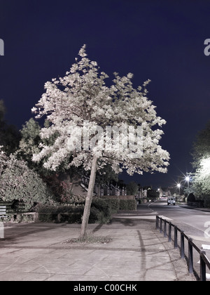 Straßen- und Bäume von Straßenlaternen beleuchtet nachts mit blauem Himmel, am Straßenrand Orten getroffenen - Stockfoto