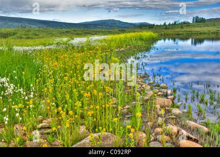 Denali nationalpark alaska blumen und bl tter in denali for Wildparks in der nahe