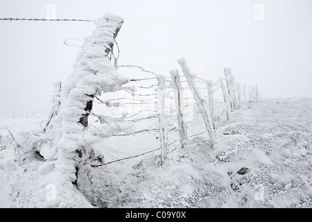 Ein Frost bedeckt Zaun in der Auvergne Vulkane Nature Reserve (Frankreich). Abschlusskonzert Recouverte de Givre - Stockfoto