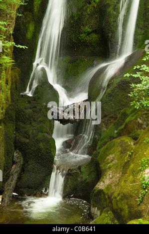 Lieferbar ghyll Kraft. ambleside, Cumbria, Großbritannien.. den Lake District, den englischen Seen. - Stockfoto