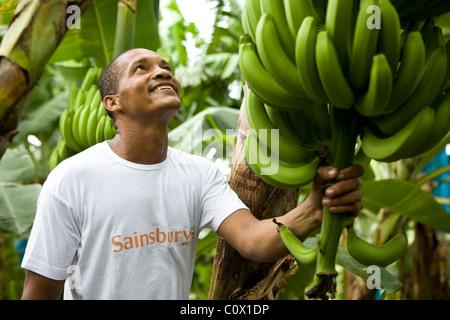 Fairtrade-Bananen Bauer aus Kolumbien - Stockfoto