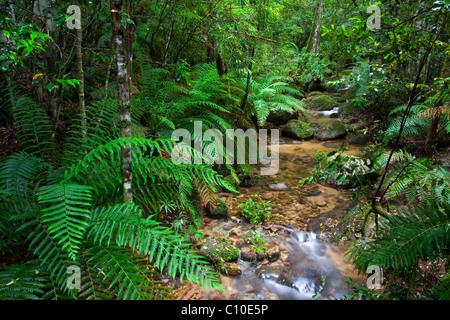 Creek, Gibraltar Range National Park, New-South.Wales, Australien - Stockfoto