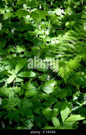 Schattenliebende Pflanzen schatten liebende pflanzen stockfoto bild 126177190 alamy