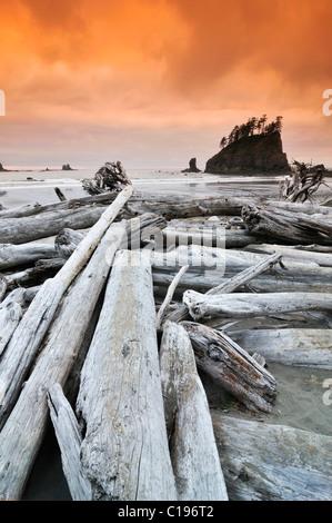 Baumstämme bis an den Strand gespült, Rialto Strand, Mora, Olympic Nationalpark, Washington, USA, Nordamerika - Stockfoto