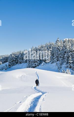 Ein männlicher Wanderer auf Schneeschuhen auf einen Wanderweg in Alaska in der Nähe von schneebedeckten Fichten - Stockfoto
