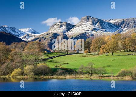 Herbstfärbung neben Loughrigg Tarn mit Blick auf den Schnee bestäubt Berge von Langdale Pikes, Lake District National - Stockfoto