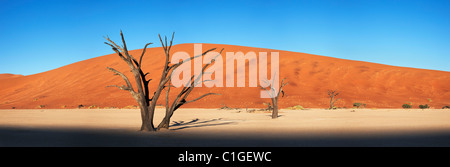 Panoramablick auf einen Toten Akazie Sossusvlei in der Wüste Namib. Namib-Naukluft N.P, Namibia - Stockfoto