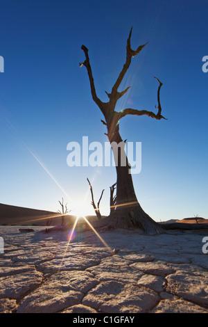 Toten Akazie in der Silhouette Sossusvlei in der Wüste Namib. Namib-Naukluft N.P, Namibia - Stockfoto