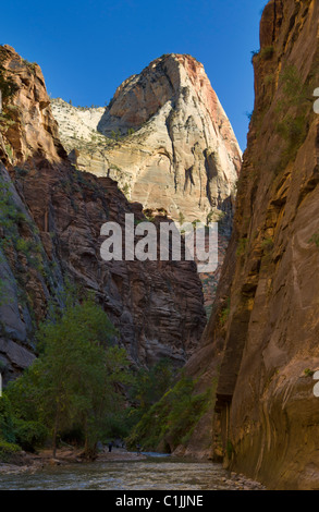 "Virgin River führt zu ""the Narrows"" Zion Nationalpark Utah USA - Stockfoto"