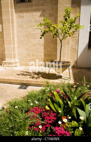 Container Pflanze / Baum & Blumen / Pflanzen im Innenhof-Gärten blühen / Gelände der Kathedrale von Sevilla, Sevilla, - Stockfoto