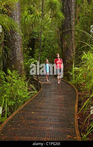 Kauri-Bäumen und Familie am Manginangina Kauri Walk, Puketi Forest, in der Nähe von Kerikeri, Northland, Nordinsel, - Stockfoto