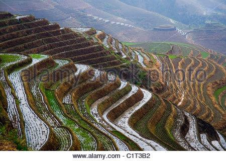 Dragons Backbone Reis Terrassen, Longji Tizian, Guilin, Guangxi, China - Stockfoto