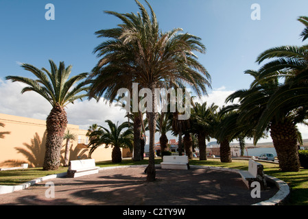 Palmen in Antigua-Fuerteventura - Stockfoto