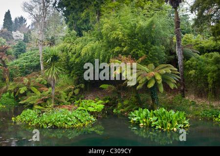 Der tropische Garten mit exotischen Pflanzen an die verlorenen Gärten von Heligan touristische Attraktion, Cornwall, - Stockfoto