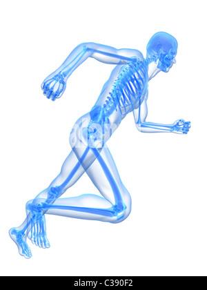 Skelett ausgeführt - Stockfoto