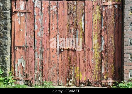 Abblätternde Farbe auf ein altes Scheunentor Carmarthenshire Wales Cymru UK GB - Stockfoto