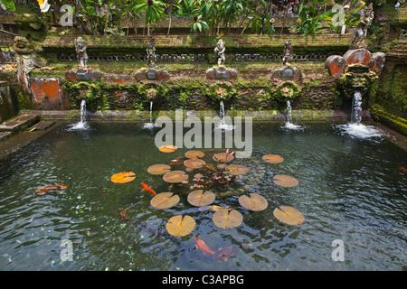 Der heilige see mit heiligen fische im golbasi park in der for Koi und goldfische in einem teich
