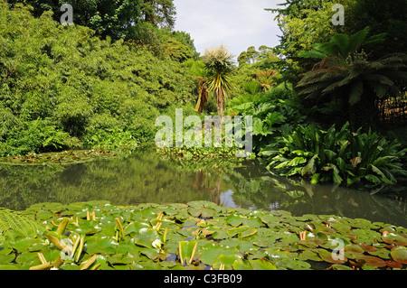 Die Dschungel-Bereich bei The Lost Gardens of Heligan in Cornwall, Großbritannien - Stockfoto