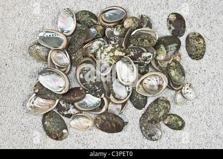 einige Muscheln auf weißem sand - Stockfoto
