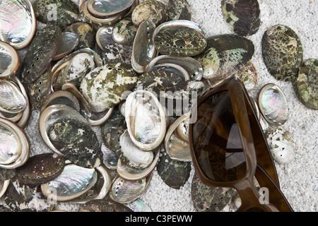 einige Muscheln auf weißem Sand mit Sonnenbrille - Stockfoto