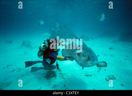 Taucher mit Stingray. Grand Cayman Island, Karibik - Stockfoto
