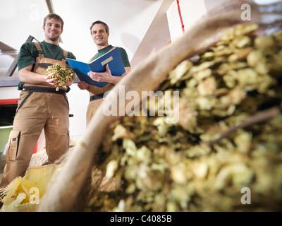 Arbeitnehmer mit Hopfen in Brauerei - Stockfoto