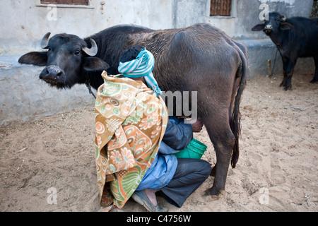Mann und Büffel