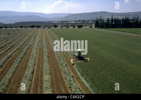 Luftaufnahme von einem Mähdrescher ernten ein Feld in der unteren Galiläa - Stockfoto