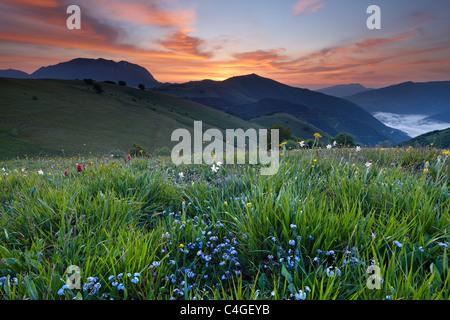 Monte Vettore und die Wildblumen auf Forca Canapine im Morgengrauen, Nationalpark Monti Sibillini, Umbrien, Italien - Stockfoto
