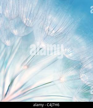 Blaue abstrakte Löwenzahn Blume Hintergrund, extreme Nahaufnahme mit soft Focus, wunderschöne Natur details - Stockfoto