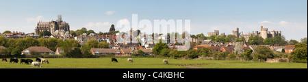 Grasende Kühe auf einem Feld vor Arundel castle