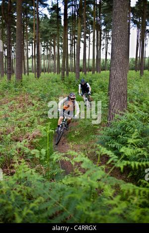 Paar Mountainbiker fahren durch Thetford Forest Park, England, Vereinigtes Königreich - Stockfoto