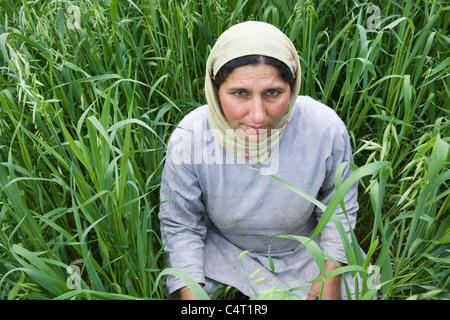 Kashmiri Frau in Wiesen in der Nähe von Manasbal See, im Bundesstaat Jammu & Kaschmir, Indien - Stockfoto