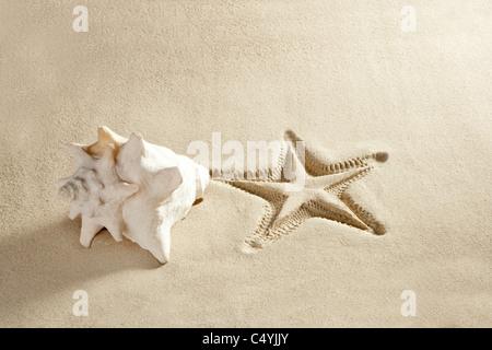 karibik-strand muschel und seesterne auf weißem sand sommer urlaub hintergrund gedruckt