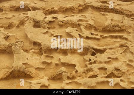 Muster und Formen durch Erosion und Verwitterung im Sandstein von Burton Cliff Burton Bradstock gegründet. Jurassic - Stockfoto
