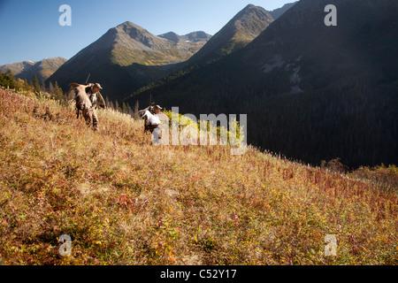 Zwei männliche Elche Jäger tragen ihre Trophäe Elch Geweih in der Bird Creek Einzugsgebiet Chugach Berge, Alaska, - Stockfoto