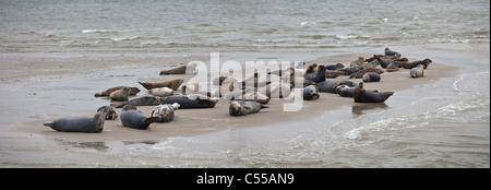 Die Niederlande, Hollum, Ameland Insel, gehört zum Wadden Sea Islands. UNESCO-Weltkulturerbe. Dichtungen. - Stockfoto