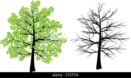 Baum-Darstellung Darstellung Frühling und winter - Stockfoto