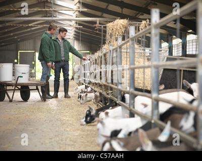 Arbeitnehmer, die Fütterung Kid Ziegen auf Bauernhof - Stockfoto