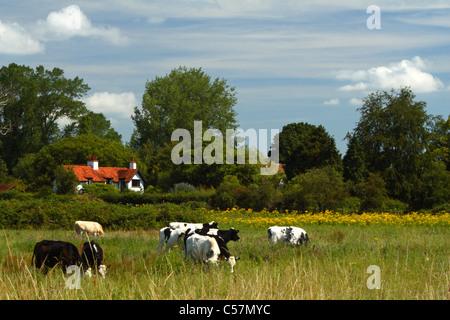 Eine Sommerwiese mit Wildblumen und weidenden Kühen entlang der Themse, Marlow, Buckinghamshire, Vereinigtes Königreich - Stockfoto