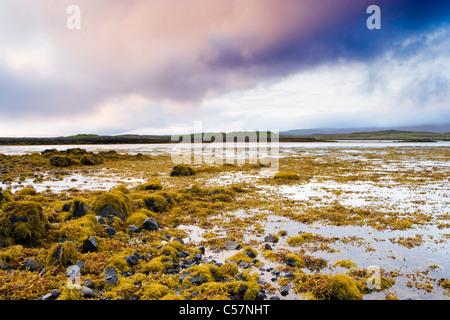Algen am Ufer des Loch Dunvegan, Isle Of Skye, Schottland, UK. - Stockfoto