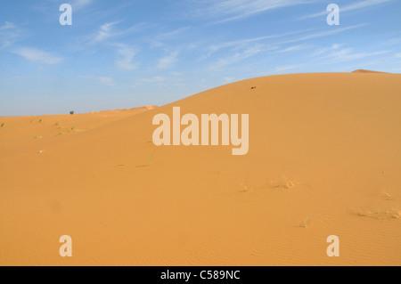 Afrika, Marokko, Maghreb, Nordafrika, Sanddünen, Erg Chebbi, Wüste, Dünen, Sahara, Sand, Natur, Landschaft - Stockfoto